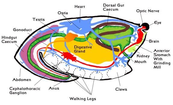 Morfología interna